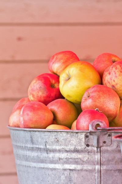 healthy apple tuna salad recipe